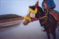 Shanti 'Horse'