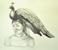 e rei_indian peacock