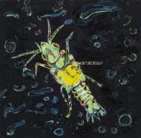 E Lindsay 2017 Gnathiid (fish parasite)