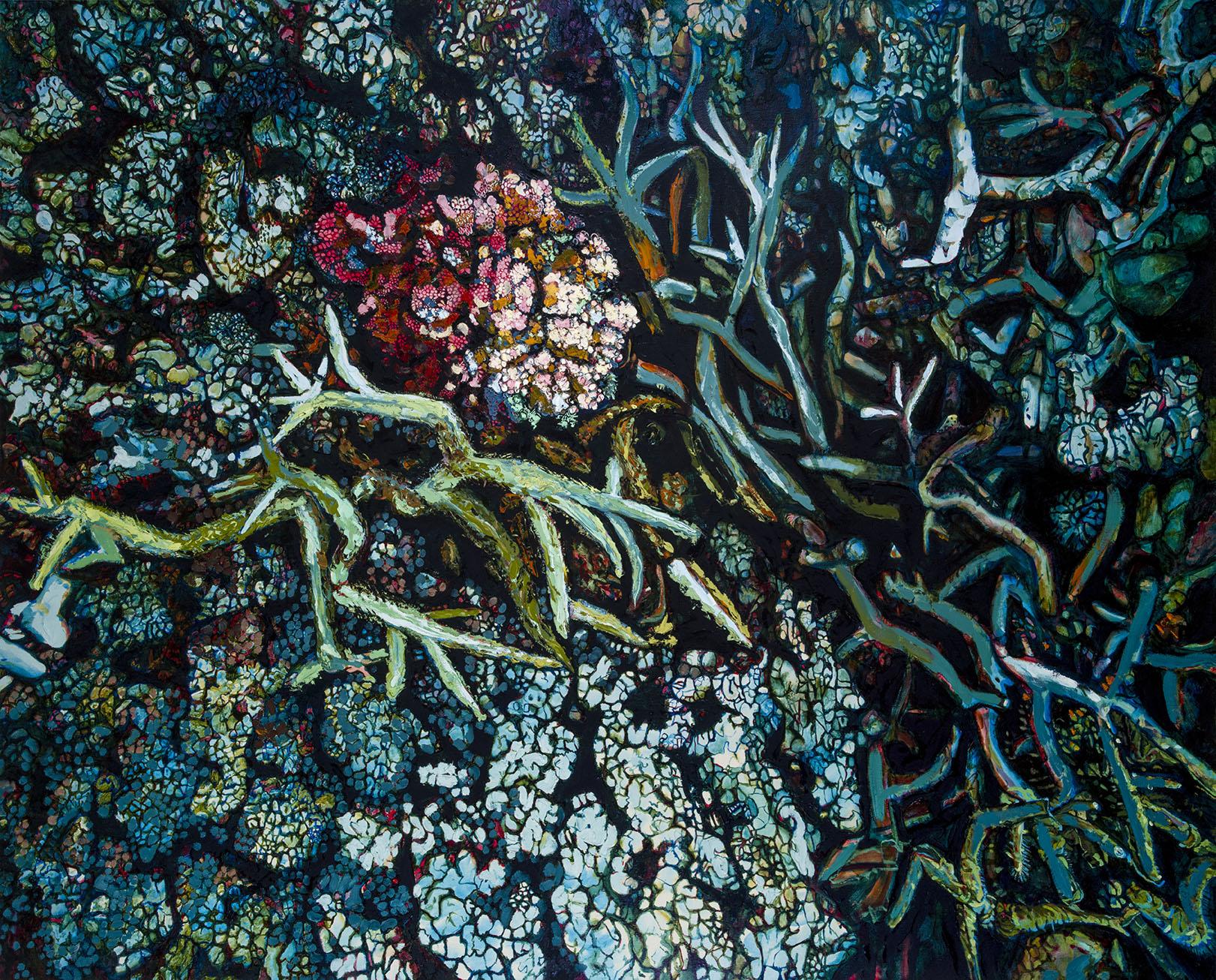 E Lindsay 2017 Live and dead corals (LizardIsland)