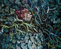 E Lindsay 2017 Live and dead corals (Lizard Island)
