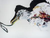 E Lindsay 2017 Northern Buller's albatross caught on longline