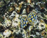 E Lindsay 2017 Nudibranches (private collection)