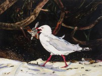 E Lindsay 2017 Silver gull and baby Green turtle